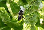 2013_08_21_japan_honeybee_01_2